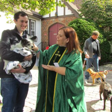Blessing Our Animals